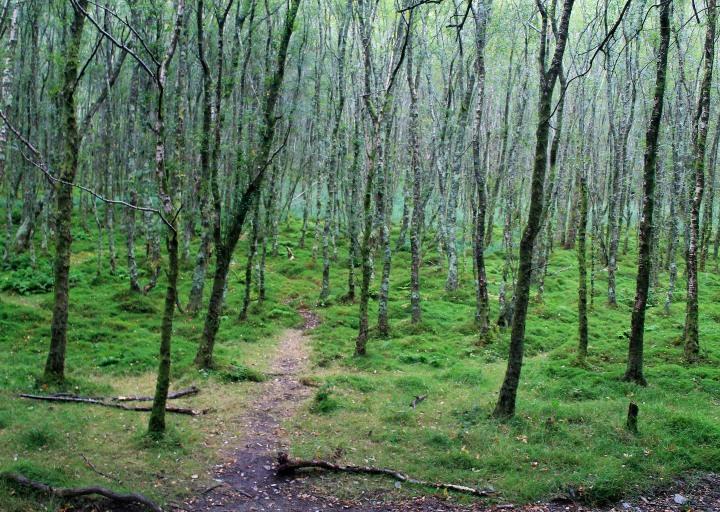Woods hiking through Glendalough.